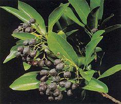 A Mystery Tree Bears Fruit