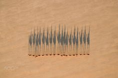 Camel Train by Jarrad Seng on 500px