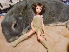 みっちー♪ @MichikoMinami7 5月8日  「お猿とうさぎ」 今日はたくさん遊んで疲れたね #momokoph
