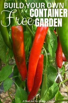Container Gardening Ideas We don't all have huge homestead properties and sometimes need to garden in containers. That can get expensive, but if you raise chickens, this is the perfect way to build a FREE container garden! Indoor Gardening Supplies, Container Gardening, Gardening For Beginners, Gardening Tips, Vegetable Gardening, Planting In Clay, Pepper Plants, Small Space Gardening, Plantar