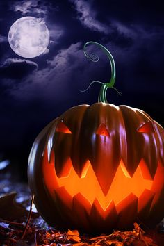 Halloween Theme Pumpkin iPhone 4s Wallpapers