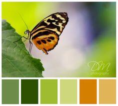 Butterfly Wings - orange & green color palette