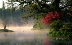 Watch out for anything that may be in the fog! I see a swan floating by.... what do you see?