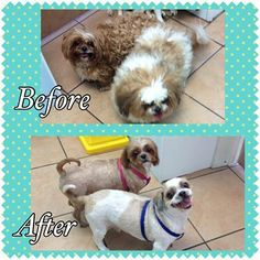 How many likes can our groomer, Angel, get for her amazing work?!