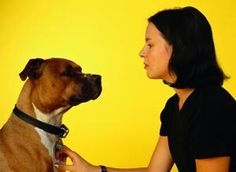 Natural Home Remedies to Kill Yeast on a Dog's Skin