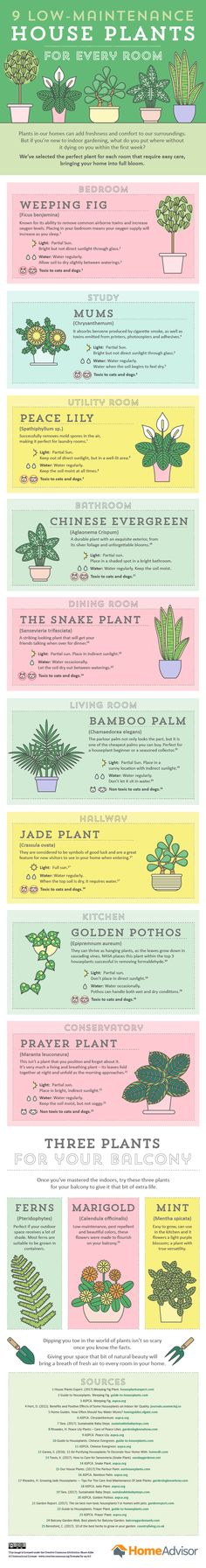 Find the best low-maintenance plant for every room of the home with this handy guide.