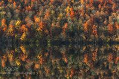 Autumn reflection by PascalBobillon. Please Like http://fb.me/go4photos and Follow @go4fotos Thank You. :-)