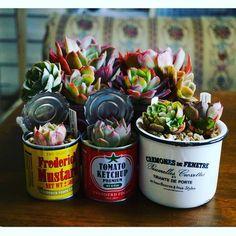 #たにく #多肉植物 #succulent #sedum #echeveria #セダム #よせうえ #エケベリア #100均で #鉢 #せりあ #ダイソー by rara.kona