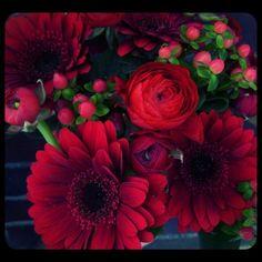 'Masserati' mini gerbera daisies and red ranunculus!  Roberts Flowers of Hanover, Hanover, NH