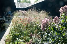 Really nice detail of Piet Oudolf's planting for Peter Zumthor's 2011 Serpentine Gallery pavilion.