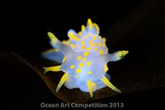 nudibranches - Google Search