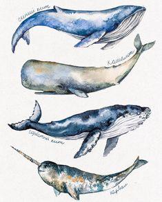 Watercolorist: @aisashashe #waterblog #акварель #aquarelle #painting #drawing #art #artist #artwork #painting #illustration #watercolor #aquarela #aisasha #whales #киты