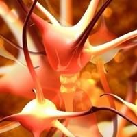 ( Reprinted with the kind permission of Cort Johnson and Health Rising. )  Small Nerve Fiber Neuropathy Commonly Found in Fibromyalgia (and Linked to Central Sensitization)
