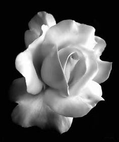 167 Best Black And White Flowers Images In 2019 Black White