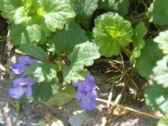 Ground cover in Grand Rapids