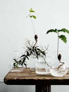 exPress-o: Jarred Plants