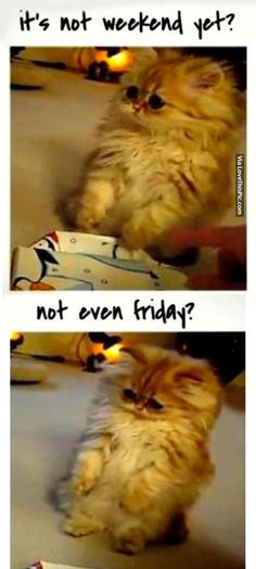 Its Not Weekend Yet? Not Even Friday? funny lol humor funny pictures funny photos funny images hilarious pictures
