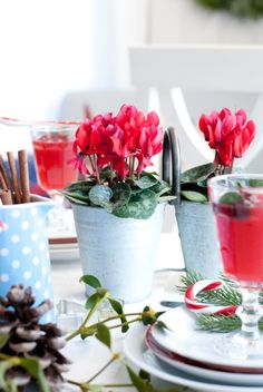 Cyclamen, red, Christmas table, Minty House