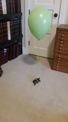 This is how I keep track of Myrtle the turtle while I clean her tank... - Imgur