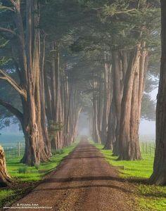 Un hermoso camino...