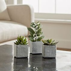 The sculptural beauty of lustrous succulent plants is realistically handcrafted for year-round use. Each faux plant is potted in a rustically finished square cement pot.PlasticTerra cotta potMade in China