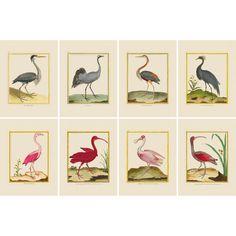 Bird Book, Shorebirds, Three Year Olds, Blue Heron, Pink Flamingos, Hand Coloring, All Print, Blue Bird, Crane
