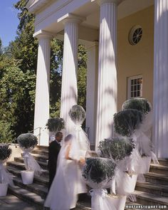Veiled Topiaries: Add romance to a garden wedding by giving topiaries their own veils. Cut lengths of tulle that are twice as long as the trees are tall (these privets are just over 5 feet). Drape a piece of tulle over each tree, puff the tulle a bit, and cinch it at the top of the trunk with wire, then add a big satin-ribbon bow. We also made cuffs of white corrugated paper to hide the flowerpots and used daisy heads to hide the soil.