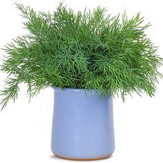 Home Remedies, Diabetes, Herbs, Healthy, Garden, Food, Therapy, Garten, Lawn And Garden