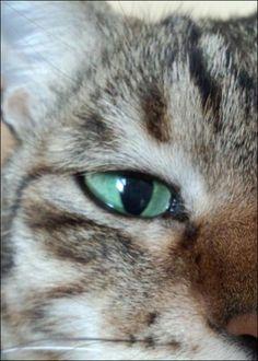 My cat Fuyumi