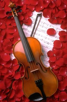 Violin with rose petals and music sheets on it