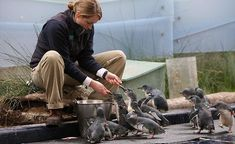 Melbourne Zoo Keeper Talk times