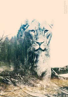 Creative double exposure: beautiful and strong lion ---------------------------------------- Kreative Doppelbelichtung mit Photoshop, mit Tutorial