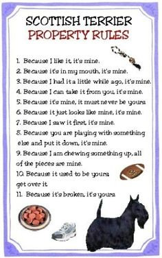 Oh, this is so my Scottie! His name is Zeus, he's a bully, has 'little-big-dog' syndrome so ALL these rules apply! I Love Dogs, Puppy Love, Cute Dogs, Jiff Pom, Dog Search, Terrier Dogs, Cairn Terriers, Baby Dogs, Doggies