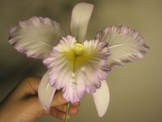 gum paste orchids | Orchid Gum Paste Orchids are a beautiful creation. Learn to make the ...