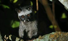 Meet the Latest Victims of Indonesia's Cruel Exotic Pet Trade-SO SHAMEFUL!  WILD ANIMALS BELONG IN THE WILD.  THEY ARE NOT PETS.  THEY CAN TAKE BETTER CARE OF THEMSELVES THAN WE CAN.