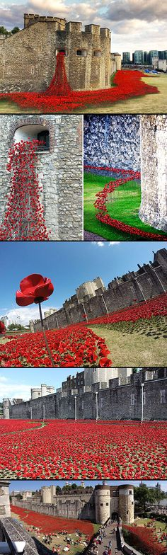 This summer, the Tower 2014 installation, conceived by artist Paul Cummins and designer Tom Piper, will commemorate each and every British or Colonial fatality from World War 1 by planting 246 red ceramic poppies in a flowing sea around the tower. The Places Youll Go, Places To See, Photo Chateau, Ceramic Poppies, England And Scotland, Abbey Road, Tower Of London, Great Britain, Beautiful Places