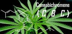 5 Health Benefits Of Cannabichromene (CBC)