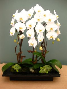 Beautiful Topiarius Orchid Arrangements