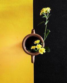 醉老红尘非为酒莫道黄花瘦  yellow and black flower and tea  #dailyphoto #iphoneonly #phoneonly #onlyphone #phonegraphy #phonecamera #千岛湖