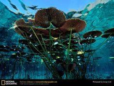 Underwater lily pads