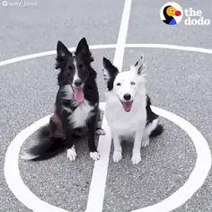 watch more videos - Tiere - Perros Cute Funny Animals, Cute Baby Animals, Funny Dogs, Animals And Pets, Cute Puppies, Cute Dogs, Dogs And Puppies, Baby Puppies, Cute Animal Videos