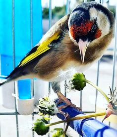 Goldfinch, Stars, Animals, Beauty, Animales, Animaux, Sterne, Animal, Animais