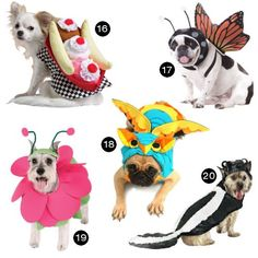 It's almost Halloween (or Howl-o-ween as we like to call it in these parts), so we've rounded up 20 of our favorite dog costumes of 2012 — enjoy!