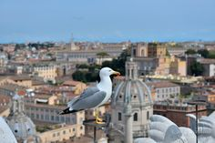 Gabbiano II by Welbis Pestana on Birds, Explore, Travel, Animals, Viajes, Animales, Animaux, Bird, Exploring