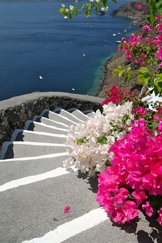 It it's a beautiful world Santorini Steps Grece Places Around The World, The Places Youll Go, Places To See, Bougainvillea, Dream Vacations, Vacation Spots, Beautiful World, Beautiful Places, Wonders Of The World