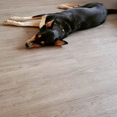 The World's best flooring for dogs & Dog owners offers beautiful wood effect flooring with the practicality of Luxury vinyl tiles. and we give of every sale to Vinyl Tiles, Wood Vinyl, Best Floors For Dogs, Best Vinyl Flooring, Dogs Trust, Luxury Vinyl Tile, Dog Owners, Dog Friends, Old Things