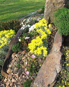 Fibigia triquetra v povrchové drenáži.