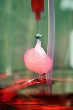 Kidney grown in lab successfully transplanted into rat
