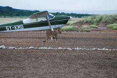 Only on a Kenya safari......See here at Shompole lodge
