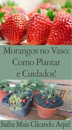Low Calorie Vegetables, Fruits And Vegetables, Comment Planter, Vegetable Garden Planning, Side Garden, Farm Gardens, Garden Crafts, Plant Decor, Botany